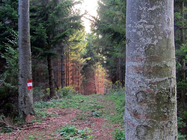 Steiermark: Wandern & Wellness für Singles und Alleinreisende | blogger.com